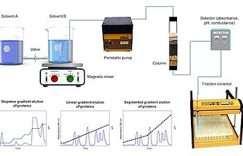 Gradient elution schema with column, peristaltic pumps and fraction collector