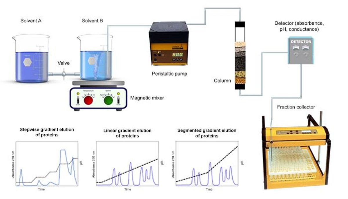 LAMBDA peristaltic pumps for gradient elution in liquid chromatography