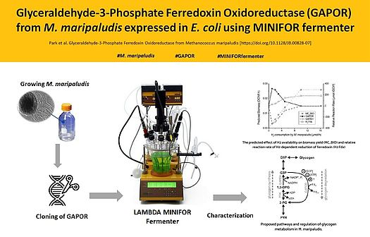 Enzyme production in MINIFOR laboratory fermenter