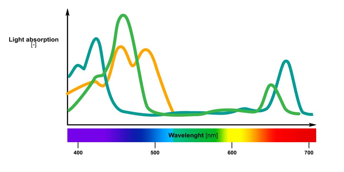 Optimal light absorption spectrum of phototrophic microorganisms
